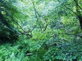 Diemerstein 61 Dschungel