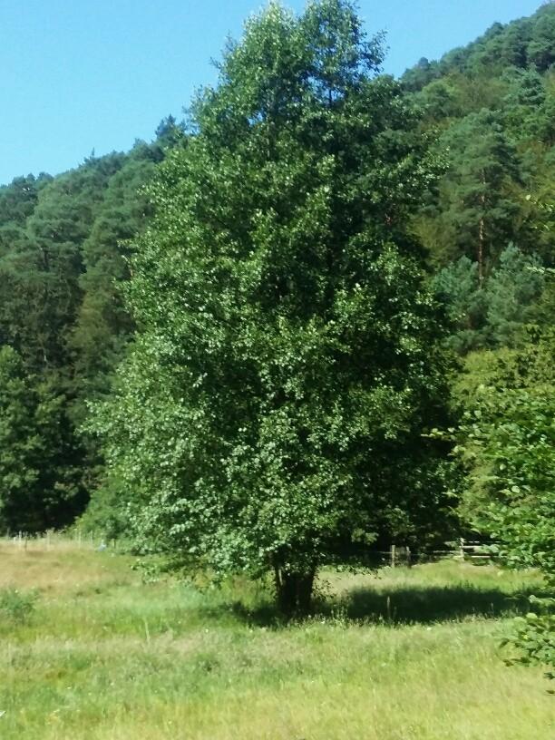 Mölschbach Baum